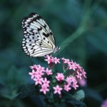 Caterpillars, Butterflies, and Unexpected Possibility